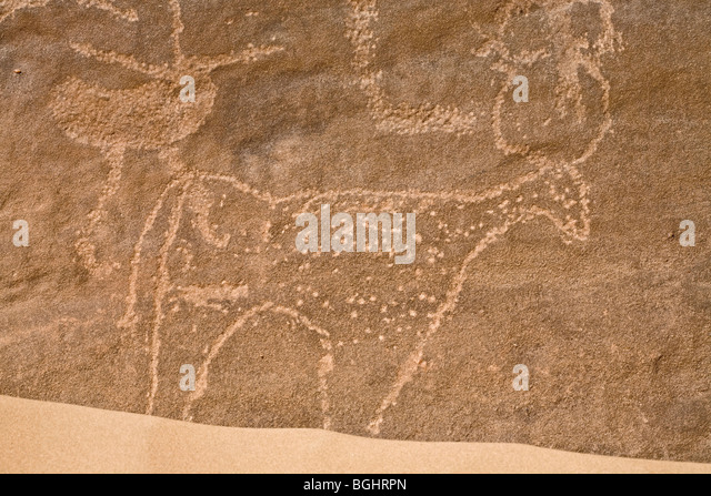 Close up of image of Bull with horns at Winklers famous Rock-Art site 26 in Wadi Abu Wasil in the Eastern Desert - Stock Image
