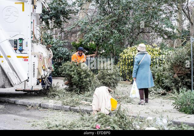 Recycling christmas trees,  London, United Kingdom - Stock Image