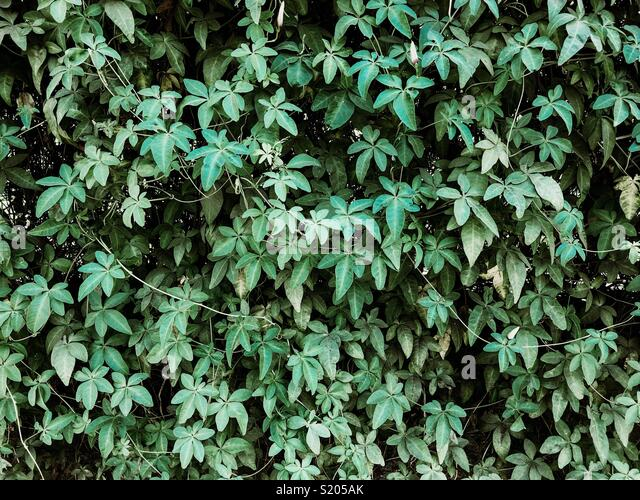 Leafs - Stock Image