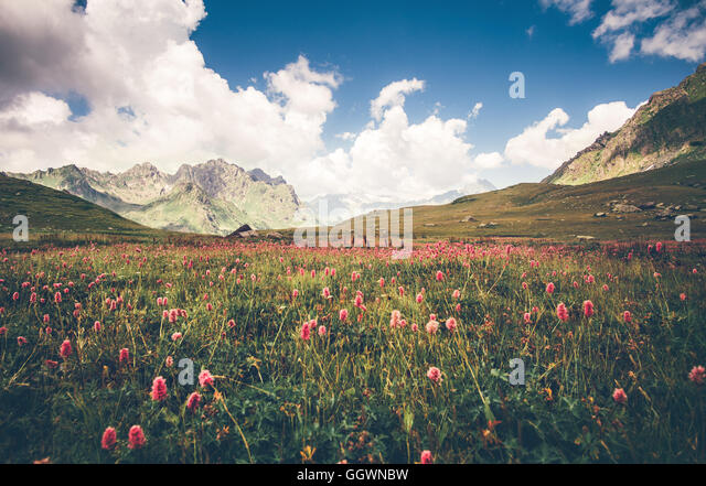 Green valley knotweed flowers and blue sky idyllic Landscape in Abkhazia with mountains on background Summer Travel - Stock Image