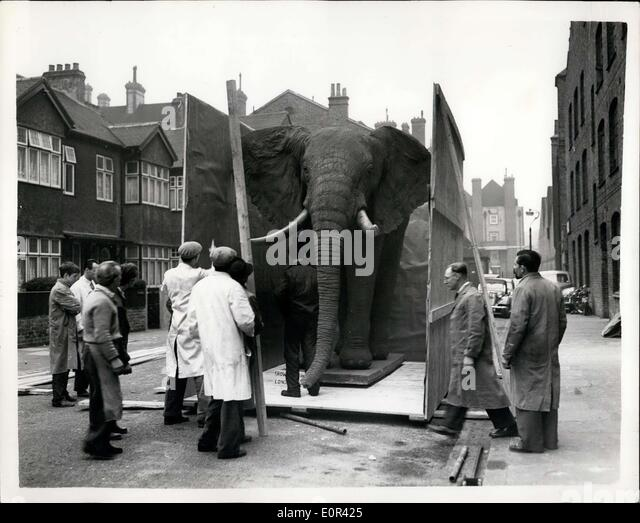 Nov. 26, 1957 - MR. BEST CONSTRUCTS AN ELEPHANT - FOR THE BELGIAN EXHIBITION.. MR. GERALD BEST who works for a London - Stock-Bilder