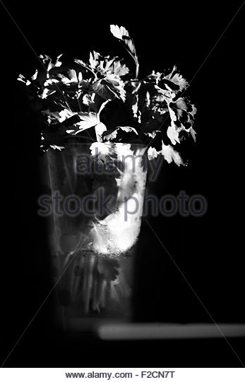 Italian parsley in a glass on a kitchen counter with a beam of light from a window Black and Withe - Stock Image