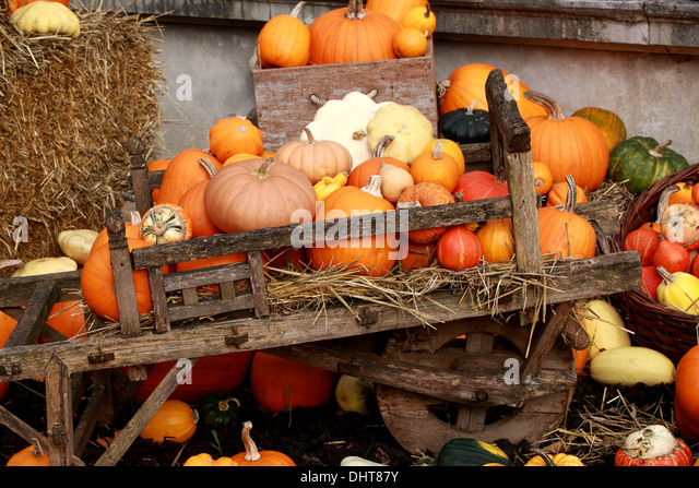 A Collection of Pumpkins and Squashes, Cucurbita pepo, Cucurbitaceae. Aka Summer Squash, Winter Squash. - Stock Image