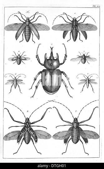 Beetles illustration - Stock Image
