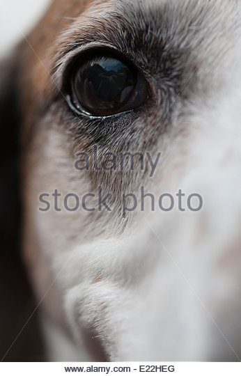 A dogs eye staring into the camera - Stock Image