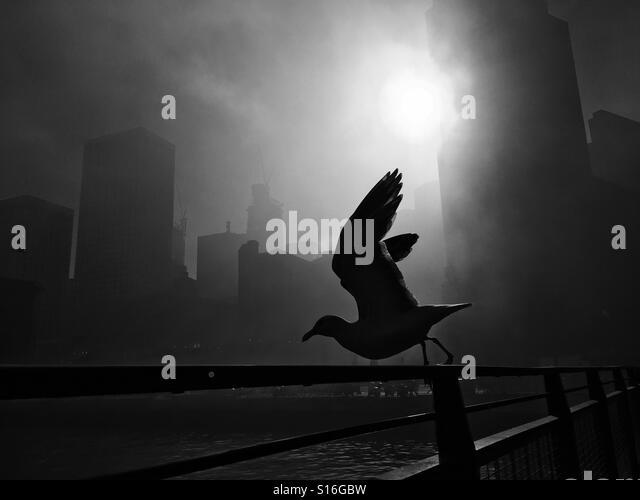 Pidgeon taking flight - Stock-Bilder