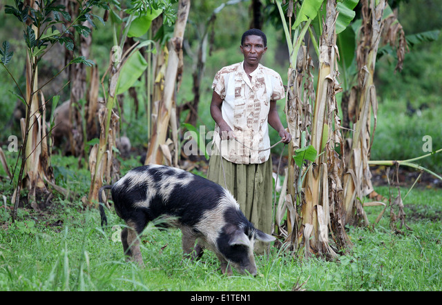 A woman and her pig in the Nakasongola region of Uganda - Stock Image