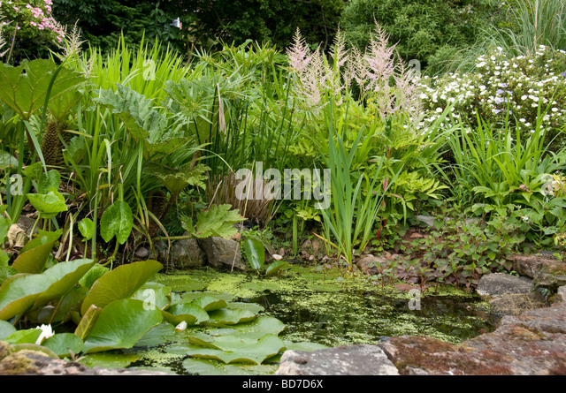 Iris pond pool stock photos iris pond pool stock images for Pond friendly plants