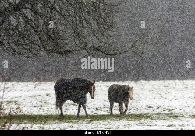 Burton Lazars 27th December 2017: Snow storm Pablos horse sanctuary trescue horses feed in the meadow field. Credit: - Stock Image