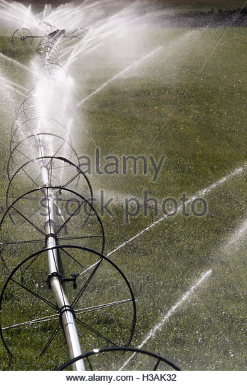 water irrigation system in action - Stock Image
