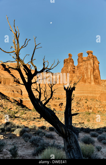 Tree, moon and The Three Gossips, Arches National Park, Moab, Utah USA - Stock Image