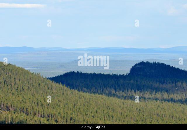 color image Dalarna forest forest landscape horizontal landscape nature needle Scandinavia shadow Sweden tree view - Stock-Bilder