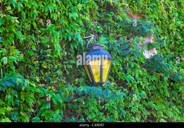 Lantern and wall covered with vines, Colonia del Sacramento (a World Hertiage Site famous for its historic quarter), - Stock Image