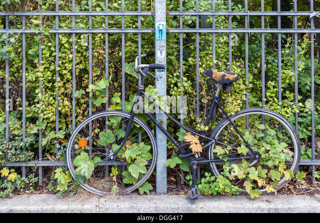 Bicycle with decayed saddle - chained to railing and abandoned is covered in plants and weeds - Stock Image