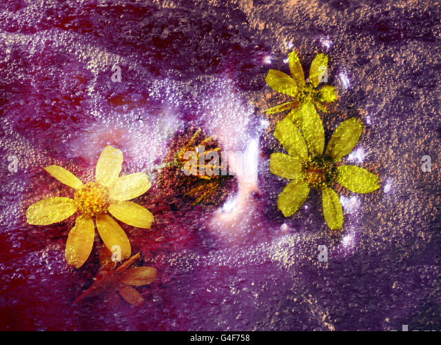 Divine Flowers in the cosmic - Stock Image