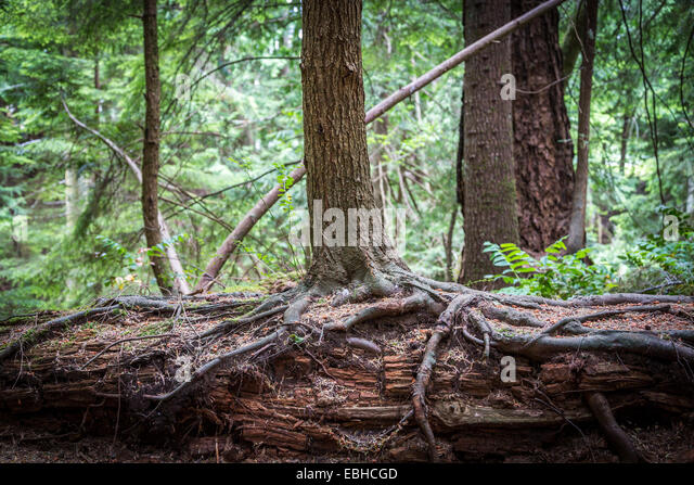 Roots canada stock photos roots canada stock images alamy for Columbia woods