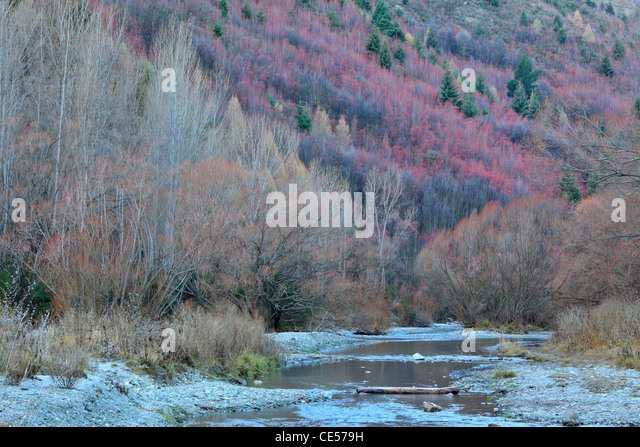 Winter color along the shores of the Arrow River in Arrowtown, New Zealand - Stock Image