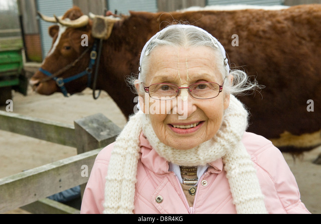 Gokul Dairy  pix and copyright Nick Cunard The Hare Krishna herd of 44 cows and oxen at George Harrison's - Stock Image