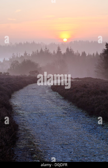 A view toward Mogshade Hill in the New Forest. - Stock Image