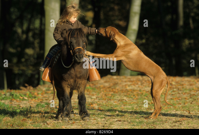 irl stock  irl stock images alamy