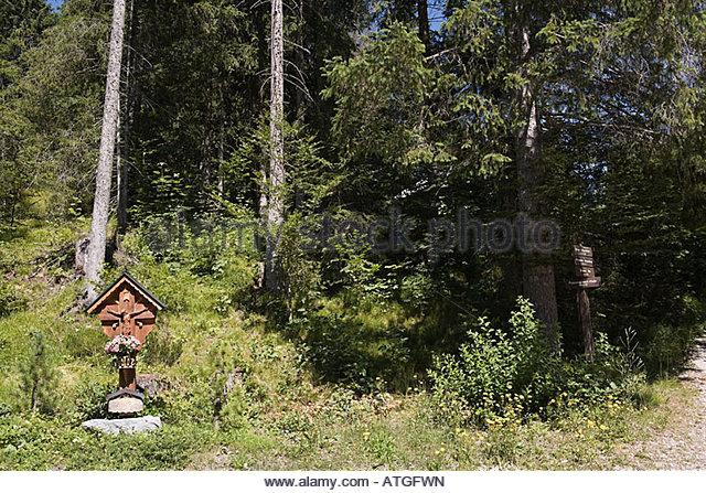 Bavarian forest - Stock-Bilder