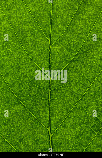 Macro leaf in detail - Stock Image