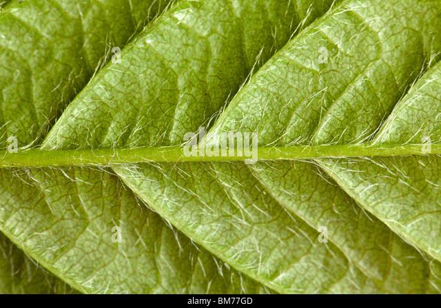 the texture of green leaf - Stock-Bilder