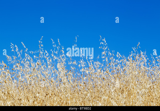 Summer days - Blue sky - Tuscany, italy, - Stock Image