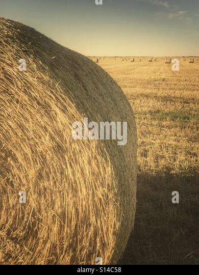 Large round hay bales in a field. - Stock Image