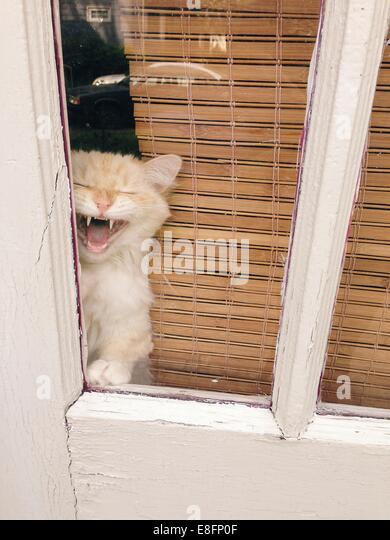 Cat looking out of window - Stock Image