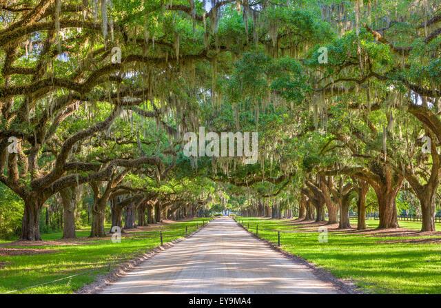 Charleston, South Carolina, USA tree lined plantation entrance. - Stock Image