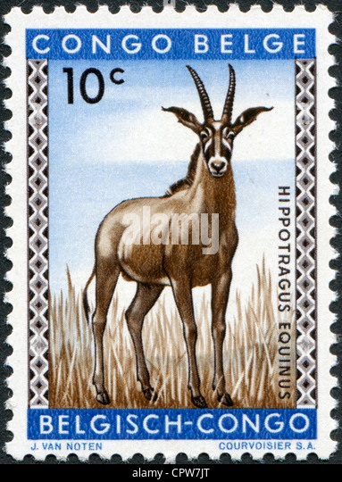 BELGIAN CONGO - CIRCA 1959: Postage stamps printed in the Belgian Congo, is shown Roan antelope, circa 1959 - Stock-Bilder