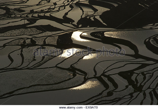 Rice terrace stock photos rice terrace stock images alamy for 1161 dawn view terrace