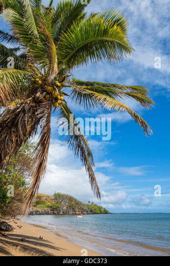 USA,Hawaii,Molokai,palm beach - Stock Image