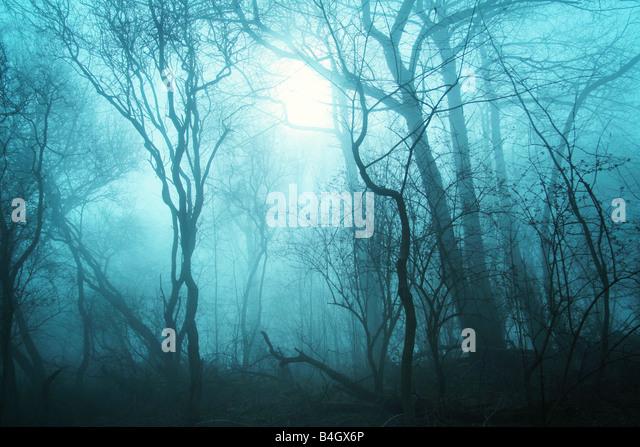 trees in the mist - Stock-Bilder