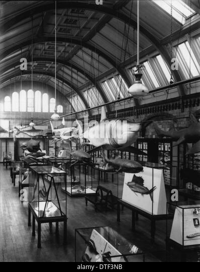 Fish Gallery, 1935, the Natural History Museum - Stock Image