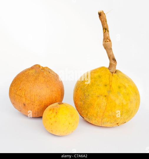 Santol fruits - Stock-Bilder