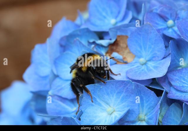 Bee happy. - Stock Image