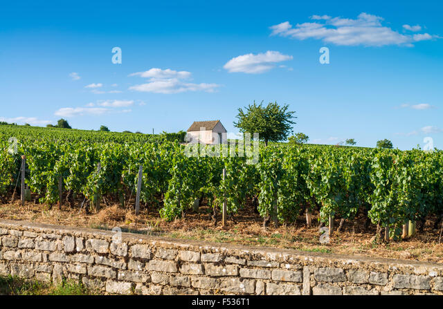 cote de beaune, burgundy, france, EU, Europe - Stock Image