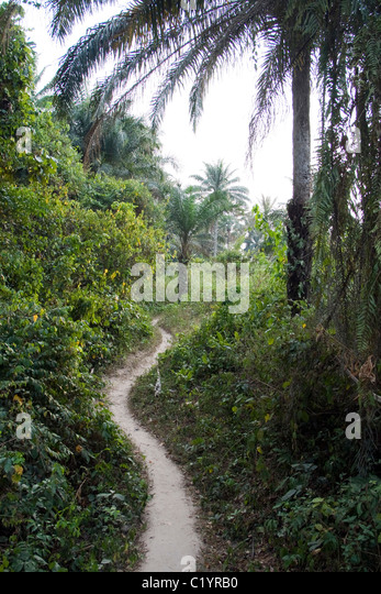 track in the forest, Betou,Ubangi River,Republic of Congo - Stock-Bilder