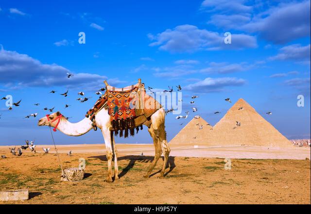 Pyramids of Giza, Cairo, Egypt - Stock Image