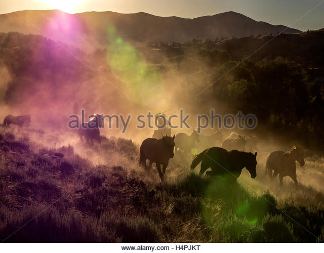 An early morning horse drive at the CM Ranch. - Stock Image