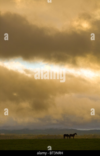 Horses graze under clearing skies, farm country of Mohawk Valley, New York State - Stock-Bilder