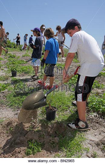 Miami Beach Florida Beach View Park Surfrider Foundation Coastal Dune Restoration planting volunteer digging shovel - Stock Image