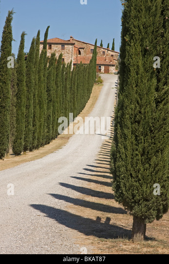 Cypresses alley in Tuscany, Italy - Stock-Bilder