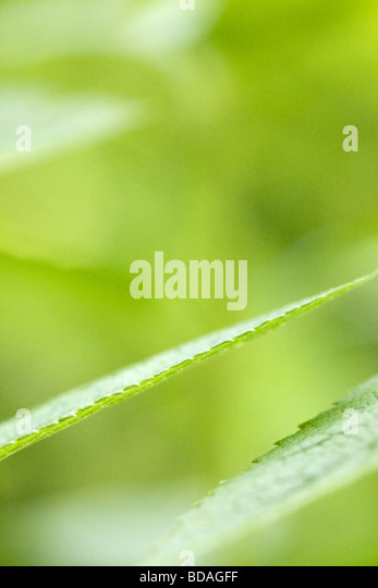 Leaf abstract - Stock Image