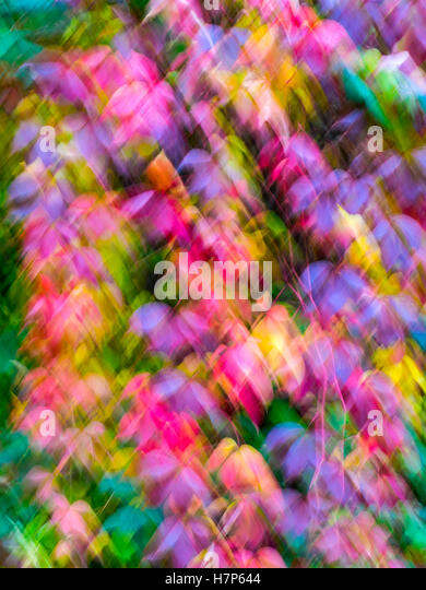 Multicoloured vine leaves in autumn with intentional blurring movement - France. - Stock Image