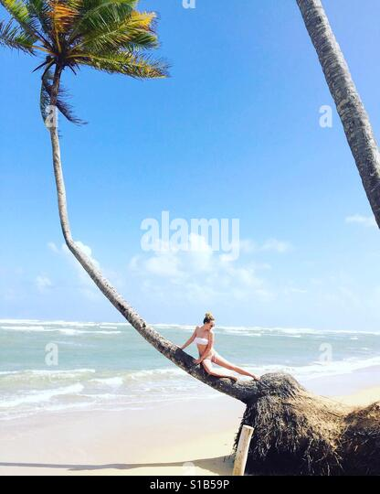 Palm tree sitting in punta Cana - Stock Image