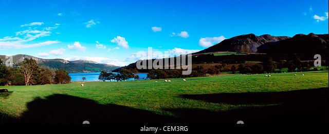 Sheep, Glencar Lake, Co Sligo, Ireland - Stock Image