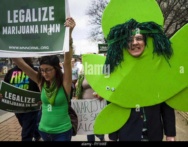 St. Paul, Minnesota, USA. 20th Apr, 2016. ANDY SCHULER, from Golden Valley, MN, dressed as a marijuana plant at - Stock Image